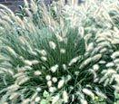 Types of Ornamental Grasses - Ornamental Grasses - University of Illinois Extension