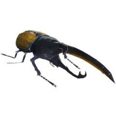 Hercules Beetle - Insects - Science - Paper Craft - Canon CREATIVE PARK