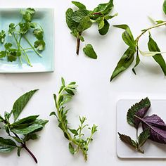 How to Chop Herbs without Bruising- Sunset Mag