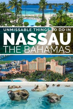 The top things to do in Nassau Bahamas. From visiting the Nassau Pirates, to the best Nassau Beaches, Nassau Atlantis Bahamas resort, attractions on Paradise Island Bahamas, Queens Staircase Nassau, the Nassau Straw Market or just disembarking from Nassau Port on a Nasssau Cruise. But our top tip for Nassau Travel is to take a Nassau Excursions to the Bahamas Out Islands to visit Bahamas Pigs from a Nassau Cruise. The Nassau Travel guide for Bahamas vacation, Bahamas Honeymoon and Nassau…