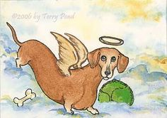 In memory of our Rusty who crossed the Rainbow Bridge on July 4, 2010. <3