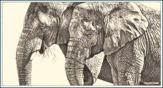 Trunks and Texture - African Elephants - Fine Art Pencil Drawings www.drawntonature.co.uk | Flickr - Photo Sharing!