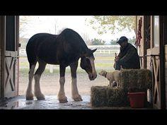 "2015 Budweiser Super Bowl Commercial ""Lost Dog"" | Budweiser #BestBuds - YouTube"