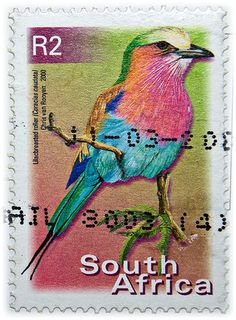 South Africa, by veloden (Lilac Breasted Roller) Old Stamps, Vintage Stamps, Lilac Breasted Roller, Postage Stamp Art, Tampons, Fauna, My Stamp, Stamp Collecting, Mail Art