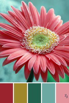 ZJ Colour Palette 221 #colourpalette #colourinspiration