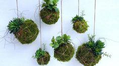 Kokedama hanging plants _A 7:3 ratio of peat soil and premium potting mix