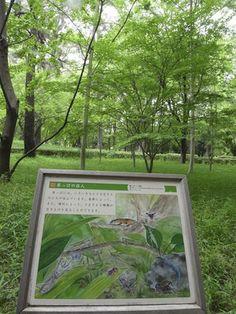 京都御苑・コオロギの里|おじゃかんばん『フォトブラ☆散歩物語』