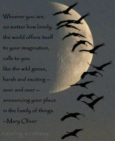 The world offers to your imagination . . .