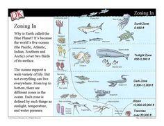 Under the Sea: Ocean Zones