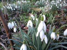 Frühlingsboten :-)