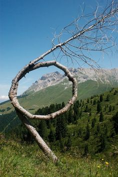 Incredible tree!