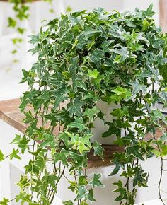 Cope with stickiness and extra moisture in the air by growing plants that reduce humidity indoors. They work. Check out!