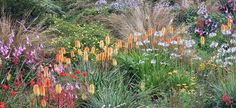 The 'South African Border' at the Garden House by celerycelery, via Flickr