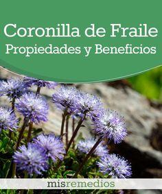 #Coronilla de fraile -Propiedades y Beneficios #PlantasMedicinales