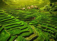 world heritage ifugao rice terraces in batad northern luzon philippines. Manila, Filipino, Banaue Rice Terraces, Philippine Tours, Les Philippines, Philippines Cities, Highland Village, Socotra, Jerash