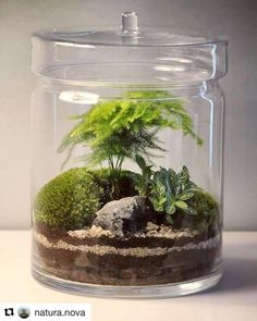 "749 Likes, 3 Comments - Terrarium Dreams (@terrariumdreams) on Instagram: ""Very nice terrarium from @natura.nova #terrariumdreams #bonsai #bonzai #bonzaï #bonsailife…"""
