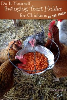 Great idea-have items to make for the girls! Florassippi Girl: DIY Swinging Treat Holder for Chickens (On the Cheap!)
