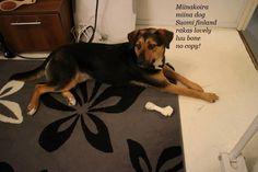 Rescue Dogs, Husky, Animals, Animales, Animaux, Animal, Animais, Husky Dog