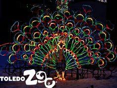 lights before christmas - Toledo Zoo Lights Before Christmas