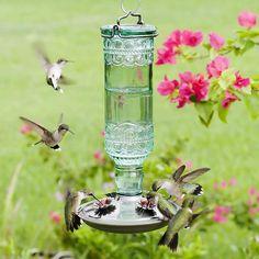 Glass Hummingbird Feeders, Hummingbird Flowers, Hummingbird Garden, Hummingbird Food, Homemade Hummingbird Feeder, Antique Glass Bottles, Green Glass Bottles, Wild Bird Feeders, Humming Bird Feeders