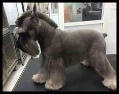 Dog Grooming Prices | Dog Grooming ** Read more details by clicking on the image. #DogTips