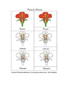 Montessori Botany Cards