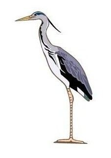 Free Heron Clipart | Blue Heron | Pinterest | Herons