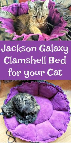 National Adopt a Cat Month, Petmate, Jackson Galaxy, AD @Petmate