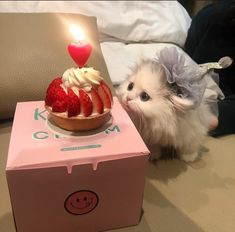 Tiny blep - your daily dose of funny cats - cute kittens - pet memes - pets in clothes - kitty breeds - sweet animal pictures - perfect photos for cat moms Cute Baby Cats, Cute Little Animals, Cute Cats And Kittens, Cute Funny Animals, Kittens Cutest, I Love Cats, Happy Animals, Tiny Cats, Photo Chat