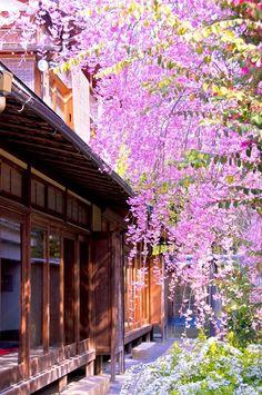京都妙心寺退蔵院の桜 Cherry blossoms, Taizo-in, Myoshin-ji temple, Kyoto Japanese Architecture, Historical Architecture, Ancient Architecture, Japanese Nature, Japanese Garden Design, All Nature, Kyoto Japan, Japan Travel, Pretty Pictures