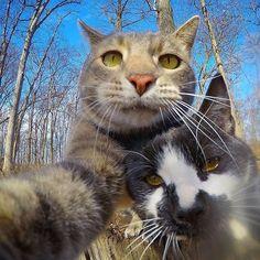 w/ the lil homey @weirdbeard_the_cat