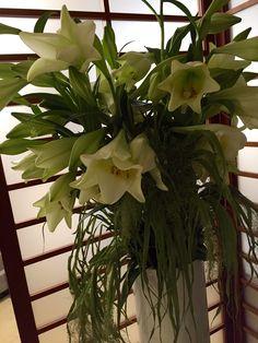 #flowers #iris