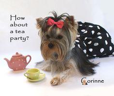 Tea party yorkie