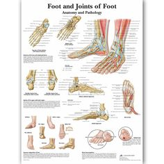 """""""Foot Joints of Foot Chart Anatomy Pathology Poster Canvas Painting Wall Pictures for Medical Education Doctors Office Classroom"""" Tube Pvc, Foot Chart, Foot Anatomy, Medical Posters, Canvas Wall Art, Canvas Prints, Nordic Art, Doctor Office, Cheap Paintings"""