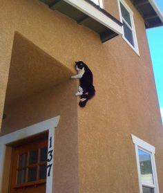 13 Ninja Cats - Cats Tips & Advice | mom.me
