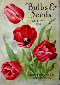 D.M. Ferry & Co. - Bulbs and seeds : autumn 1924