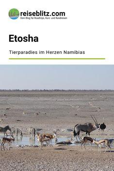 Etosha: Tierparadies im Herzen Namibias Safari, Travel, Round Trip, Travel Report, National Forest, Africa, Vacation, Viajes, Animales