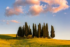Warm Caress // Cálida Caricia  - Shot at golden hour in San Quirico d'Orcia during a holiday trip to Tuscany