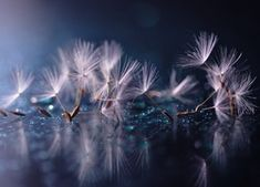 Cosmology of the fluffy by Lafugue Logos on Golden Background, Great Backgrounds, Life Is An Adventure, Cover Photos, Dandelion, Nature Photography, Wallpaper, Flowers, Image