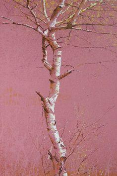 김종원 Kim, Jong-Won Abstract Landscape, Landscape Paintings, Crazy Wallpaper, Birch Tree Art, Sans Art, Rose Oil Painting, Wall Candy, Shade Trees, Learn Art