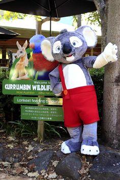 Blinky Bill   Currumbin Wildlife Sanctuary