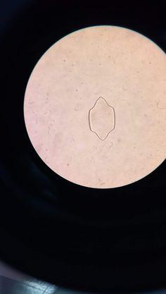 Otra de sus tantas forma #cristal #acidourico #geology #mineralogy
