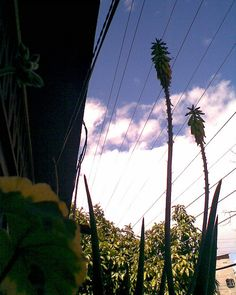 07-mayo 08 flores Mayo, Utility Pole, Plants, Places, Flowers, Hipster Stuff, Plant, Planting, Planets