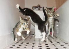 Cat Dance Party!!