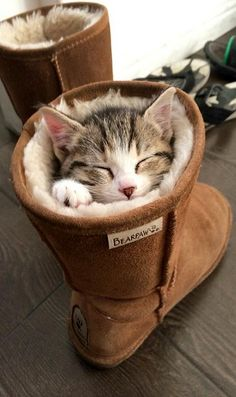 UGG is a perfect cat bed..