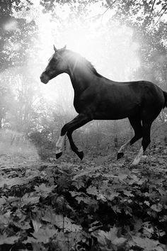 FreeiOS7 - mt32-horse-art-animal-fall-leaf-mountain-flare-dark-bw…