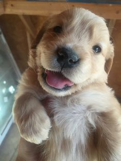 This smiling Golden Retriever will make you smile. Pin for a friend who needs cheering. Enjoy RUSHWORLD boards, BARK RUFFINGTON'S DOG KINGDOM, UNPREDICTABLE WOMEN HAUTE COUTURE and LULU'S FUNHOUSE. Follow RUSHWORLD! We're on the hunt for everything you'll love! #CuteAnimals #BabyAnimals #Puppies