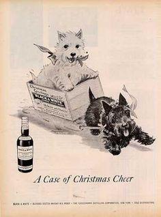 """B&w Ad """"A Case of Christmas.."""" Westie/scottie (1956)"""