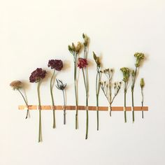 A fresh new take on dried flowers!  A colorful assortment of dried flowers affixed to any flat surface with copper metallic washi tape. The washi tape will not leave any holes or sticky residue on the display surface. You can assemble this on a wall, cabinet, door, any flat area of your choice. Vertical, horizontal, organic, the display composition is totally up to you! This DIY decor allows you artistic freedom in design and location. Bring the garden inside with this lovely floral…