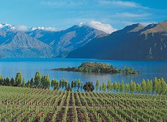 New Zealand is mostly a white wine producing country with Chardonnay being planted everywhere. Check it out here:http://chardonnayfans.com/new-zealand-wine-regions-chardonnay-highlighted
